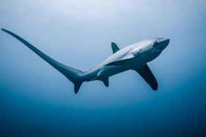 Видеошок: в Австралии женщина поймала акулу голыми руками