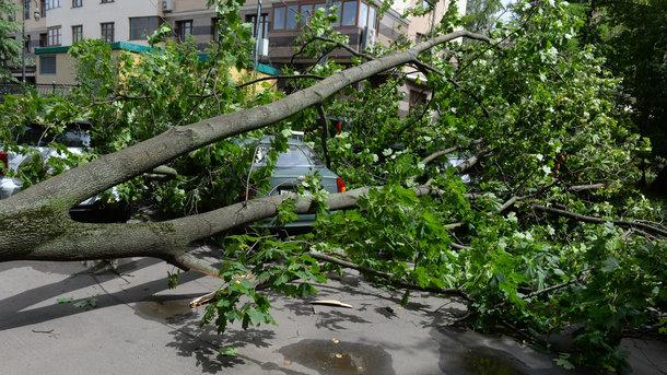 Дерево не выдержало сильного порыва ветра. Иллюстрация: Life.ru