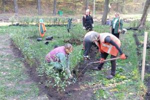 В киевском парке высаживают лабиринт из кустов