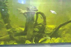 Все виды рыб Днепра соберут в одном аквариуме Киевского зоопарка