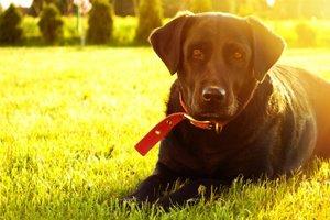 Собаки могут распознавать рак у человека