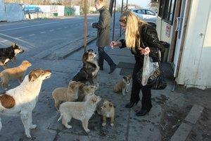 Новые законы о животных: прогулка с собакой - только для взрослых