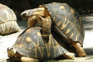 Почему у 186-летнего самца черепахи не было детей: ученые нашли невероятный ответ