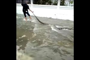 Огромная змея выплыла в центре Бангкока во время наводнения