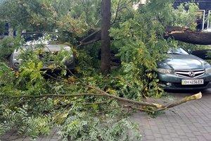 В Одессе дерево упало на четыре машины