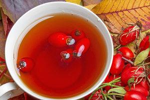 Чай из шиповника: полезные свойства и рецепты