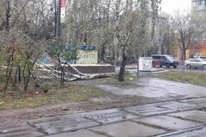В Киеве продолжают массово падать деревья