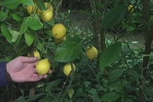 Под Винницей садовник создал настоящие джунгли