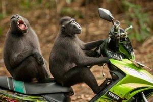 Появились смешные снимки финалистов конкурса Comedy Wildlife Photography