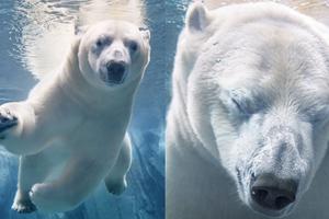 Фотограф опубликовал снимки вымирающих животных