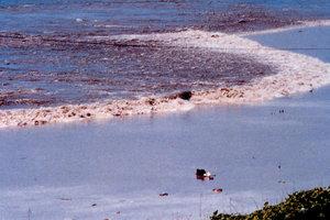 Мощное землетрясение в Тихом океане: объявлено предупреждение о цунами