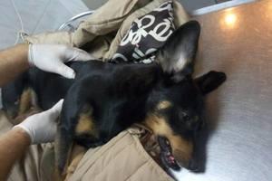 В Одессе пьяный владелец таксы выкинул собаку с седьмого этажа