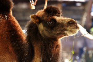 In Russia, visitors to the zoo severely mutilating animals