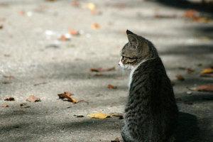 В Одессе окна подвалов оставят открытыми для бездомных котов