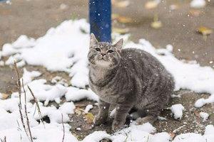 В Запорожье выпал первый снег: опубликовано видео