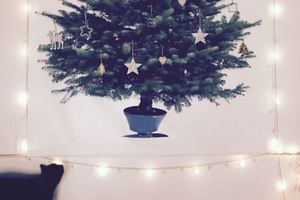 Это гениально! ТОП-25 идей, как уберечь новогоднюю елку от домашних любимцев