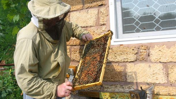 В Украине пересчитают всех пчел