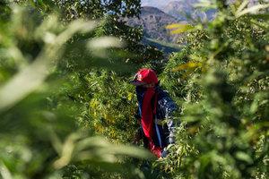 Хороший гашиш и дружелюбие местных: туристы признались в любви к Марокко