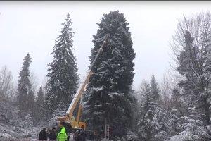 Как главная елка страны добирается в Киев: все подробности