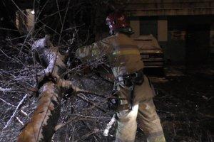 Снегопад  на западе Украины: поваленные деревья и опасность лавин