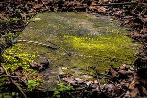 Ученые вскрыли могилу Николая Чудотворца: появились фото