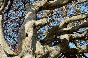 В Тернопольской области старое дерево убило мужчину