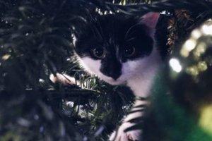 Коты во всем мире начали уничтожать елки