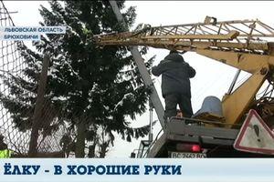 Главная елка Львова досталась городу бесплатно