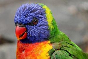 Попугай научился повторять звук iPhone