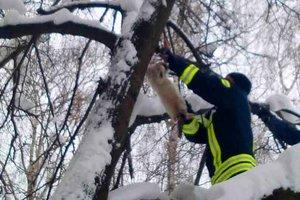 Рождественское чудо: под Киевом спасли рыжего котика