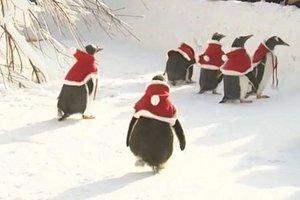 Пингвины в костюмах Санта-Клауса поздравили детей в зоопарке
