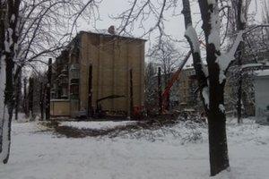 Why in Kiev severely pruned poplar