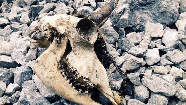 В Российской Федерации ученые обнаружили череп старинного единорога
