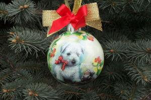 Бесплатный Новый год: куда пойти 31 декабря и 1 января в Киеве