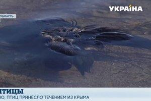 В Херсонской области среди диких птиц вспыхнул мор