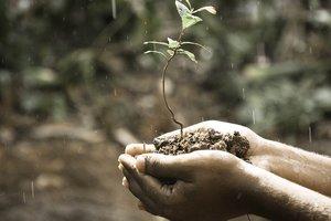 Кабмин разрабатывает программу поддержки фермерства в Украине