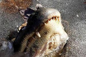 Замерзшие в США аллигаторы ожили
