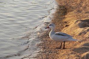 В Херсонской области сожгли 9 тысяч погибших в Черном море птиц