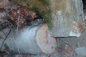 На Закарпатье поваленное ветром дерево убило мужчину