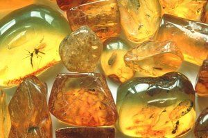 Transcarpathian customs passed to Hungary about a ton of amber
