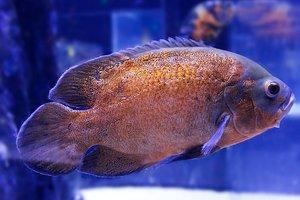 Внутри рыбы возле Коста-Рики обнаружены жуткие находки