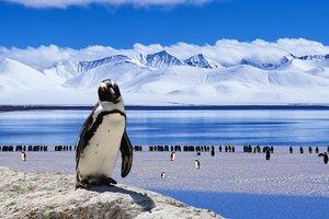 Пингвин случайно запрыгнул в лодку к ученым в Антарктиде: забавное видео