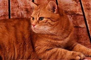 Ученые нашли неожиданное сходство людей и кошек