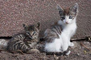 Выбрасывать животных на улицы хотят запретить на законодательном уровне