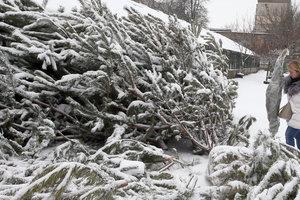 В Киеве продлили срок утилизации новогодних елок
