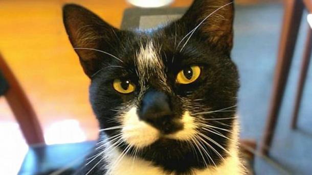 В новейшей Зеландии кот-вор трусов поссорил влюбленную пару