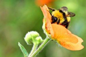 Не шмели, а пчелы, пауки и мотыльки: в УКАБ рассказали, что Украина экспортировала в 2017-м