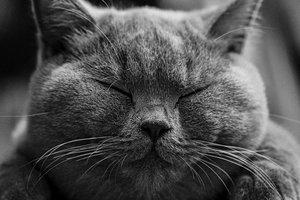 Инвестиции в домашних питомцев: сколько можно заработать на породистых котах