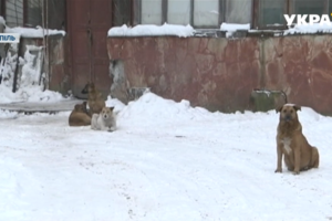 The attack of stray dogs in Ternopil warned of the danger