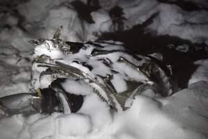 Авиакатастрофа в Подмосковье: летчик опроверг одну из версий крушения Ан-148